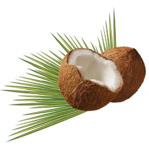 coconut-979858_1280