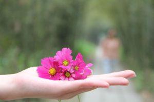 wild-flowers-1139448_1280